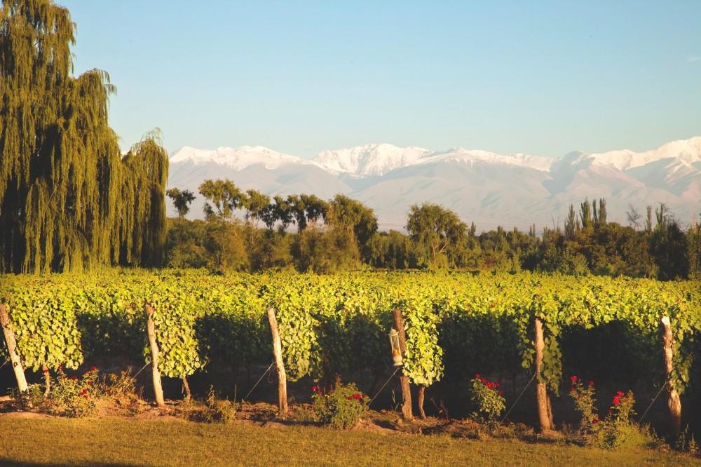 Mendoza.jpg (1000×666)