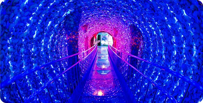 img_tunnel_3.jpg (710×360)